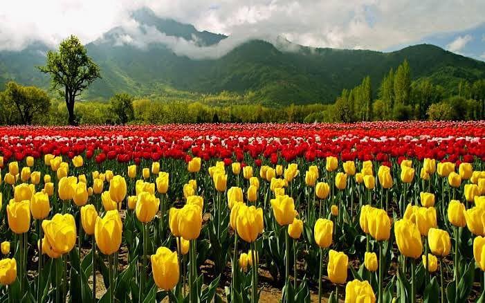 आम लोगों के लिए खुला श्रीनगर का ट्यूलिप गार्डन, PM मोदी की अपील पर कोरोना के बीच 1 लाख पर्यटकों के आने की उम्मीद
