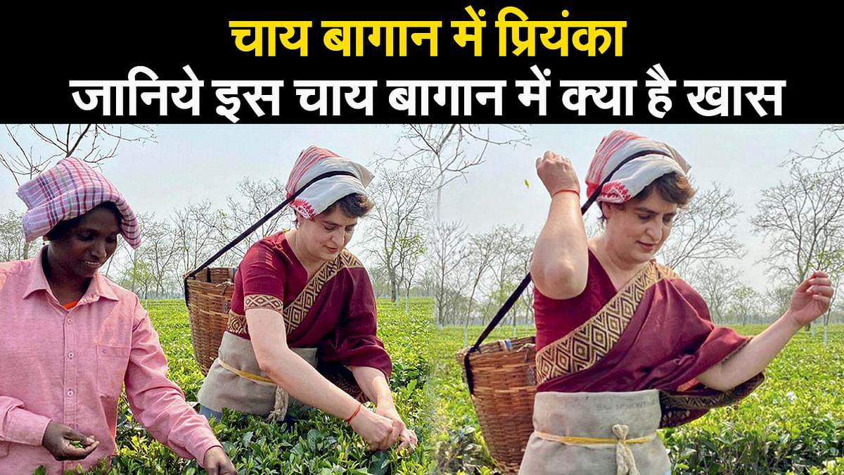 चाय बागान में प्रियंका... जानिये इस चाय बागान में क्या है खास  I Assam Election 2021