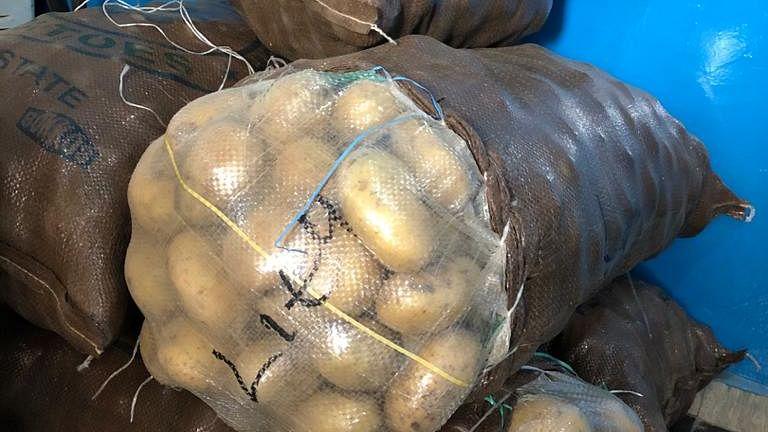 Potato price today : पांच रुपये किलो बिक रहा है आलू, उत्पादक परेशान, जानें क्या है वजह...