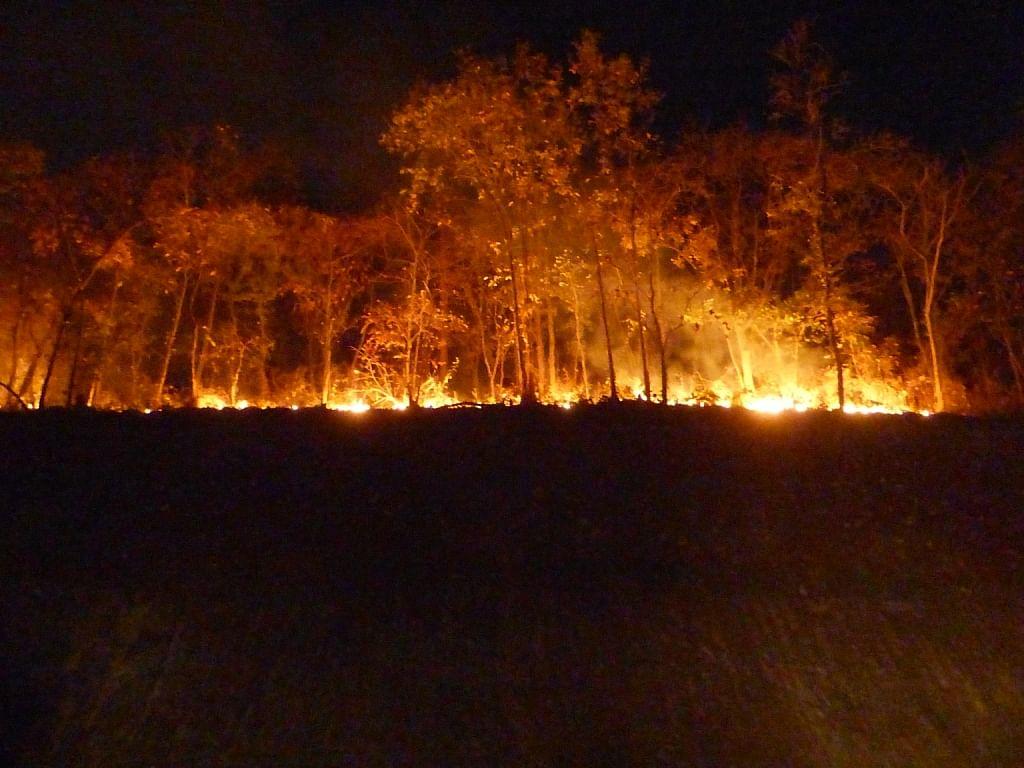 हजारीबाग पूर्वी प्रमंडल के बरही जवाहर घाट में एनएच किनारे जंगल में लगी आग, हिरण की मौत, आग पर काबू पाने का दावा, पर्यावरणविद ने की ये मांग