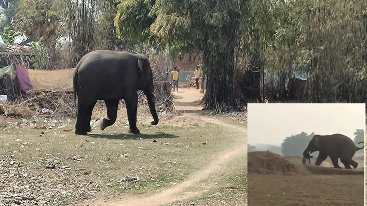 गुमला के जारी में जंगली हाथी ने तीन घरों को किया क्षतिग्रस्त, घर में रखे चावल, धान सब कुछ बर्बाद