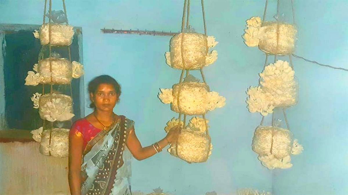 घर के कामकाज के बाद बचे समय का सदुपयोग कर रही है रामगढ़ की ग्रामीण महिलाएं, मशरूम की खेती से हो रही आत्मनिर्भर