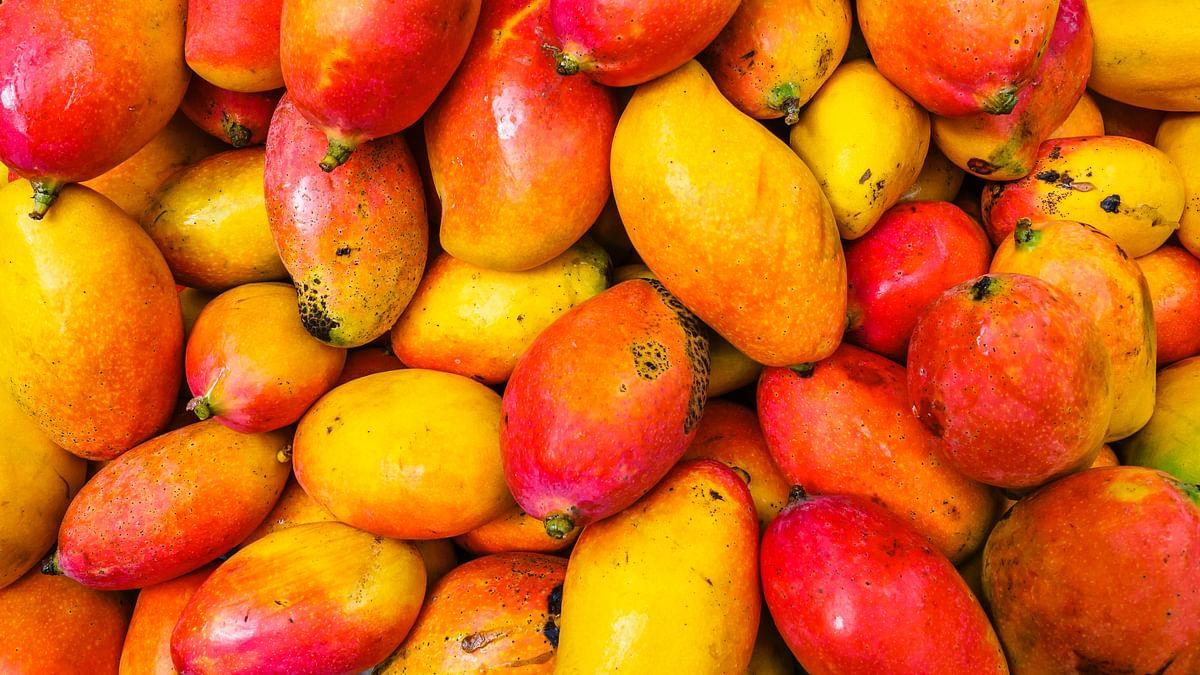 Mango Health Benefits: यूं ही नहीं है आम फलों का राजा, कैंसर से लेकर डायबिटीज, हार्ट प्रॉब्लम समेत इन मामलों में फायदेमंद