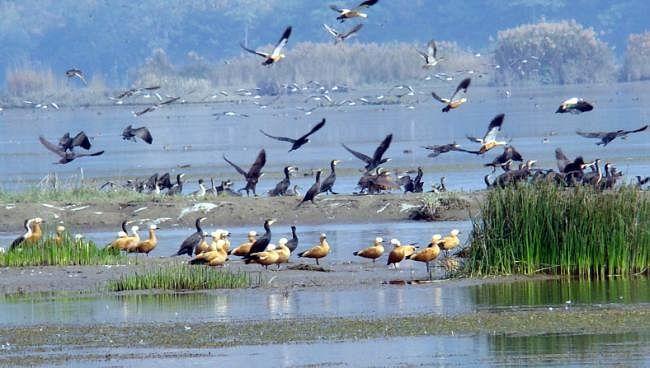 Prabhat Khabar EXCLUSIVE : बिहार में वेटलैंड ऑथोरिटी बनाने की कवायद शुरू, 12 जिलों के 26 बड़े जलाशयों के बनेंगे हेल्थ कार्ड