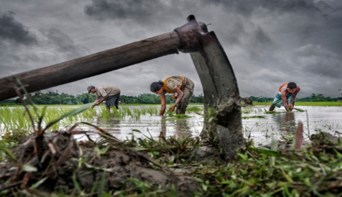 मौसम विभाग की भविष्यवाणी : इस साल भी ग्रामीण भारत अर्थव्यवस्था के लिए बनेगा 'सुरक्षा कवच', फसलों का बंपर होगा पैदावार