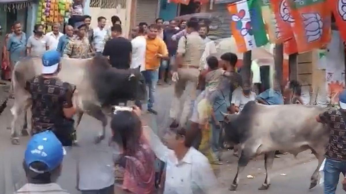 जब अचानक ममता बनर्जी की चुनावी सभा में हुई सांड की एंट्री, लहरा रहे थे बीजेपी के झंडे