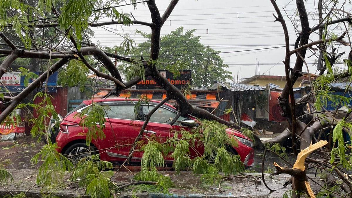 सिलीगुड़ी में तूफान का कहर, उखड़ गये कई पेड़