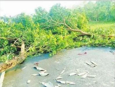 Bihar Weather : आंधी और ओलावृष्टि से दर्जनों पेड़ गिरे, बिजली आपूर्ति बाधित, आम की फसल को क्षति