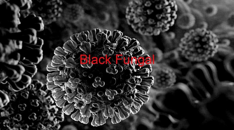 डायबिटीज वाले कोरोना मरीजों को है ब्लैक फंगस से सबसे ज्यादा खतरा, ये व्यक्ति आ सकते हैं चपेट में, जानें क्या है इसके लक्षण