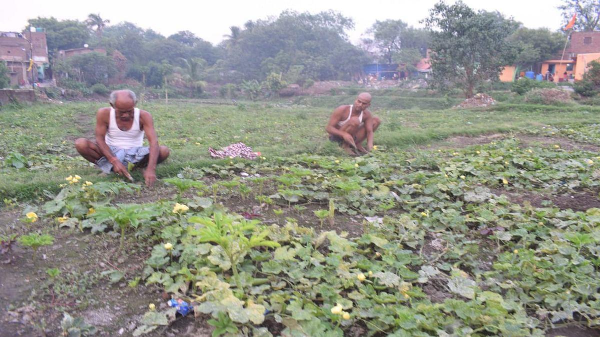 कोरोना ने तोड़ी झरिया के किसानों की कमर, बाजार में हो गयी खरीदारों की कमी