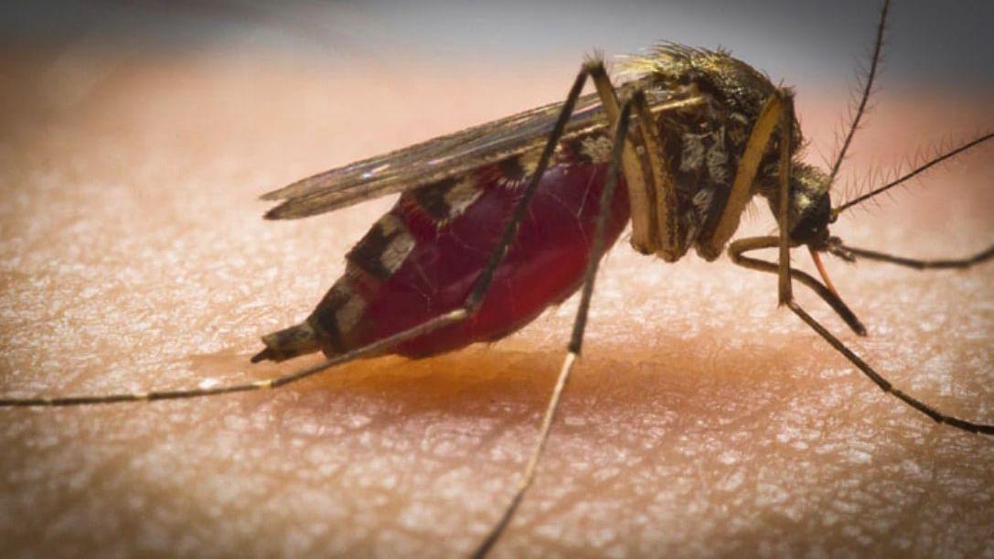 National Dengue Day 2021: मानसून के मौसम में ही फैलता है डेंगू, कोरोना की तरह होते है इसके कुछ लक्षण, भूल कर भी न करें लापरवाही, ऐसे करें बचाव