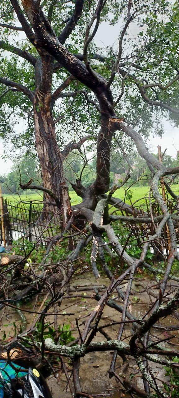 Yaas Cyclone, Bihar Weather Forecast  Updates:  बिहार में मौसम बिगड़ने से 7 की मौत, आज भी बारिश के आसार