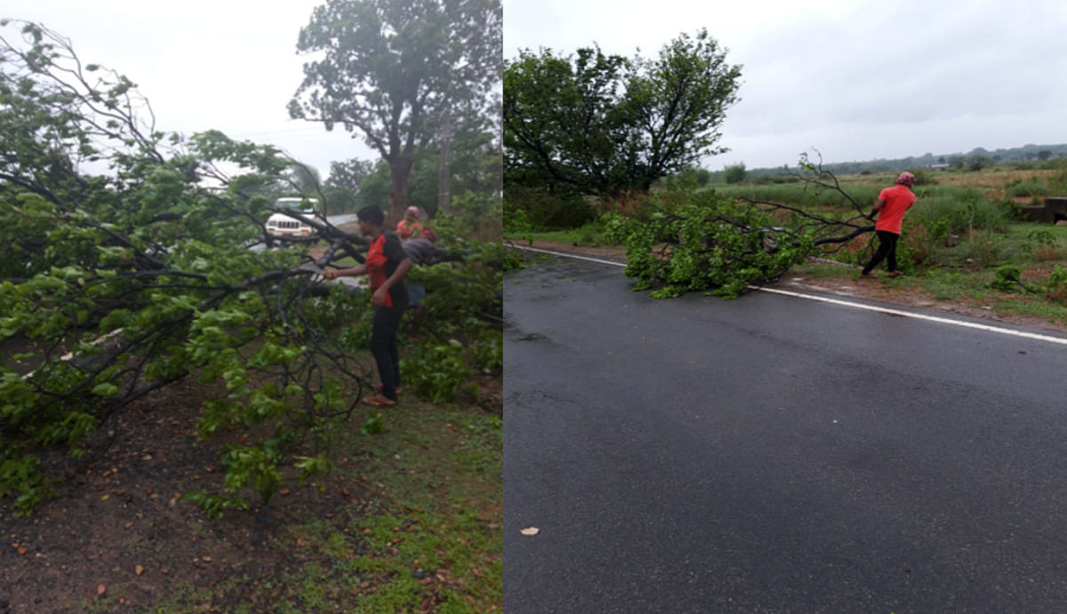 Jharkhand news : पूर्वी सिंहभूम के चाकुलिया- मटियाना मार्ग लोधासोली के पास सड़क पर गिरी पेड़. गिरे पेड़ को सड़क से हटाया जा रहा.