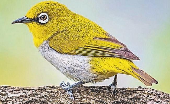 विश्व प्रवासी पक्षी दिवस आज, बिहार के इस जिले में हर साल एक लाख प्रवासी पक्षियों का लगता है जमावड़ा