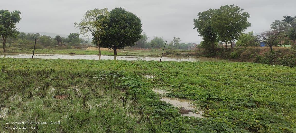 चक्रवाती तूफान Yaas की बारिश से खेतों में लगी सब्जियां पानी में डूबीं, हजारीबाग के बड़कागांव में 32 लाख की सब्जियां हुईं बर्बाद