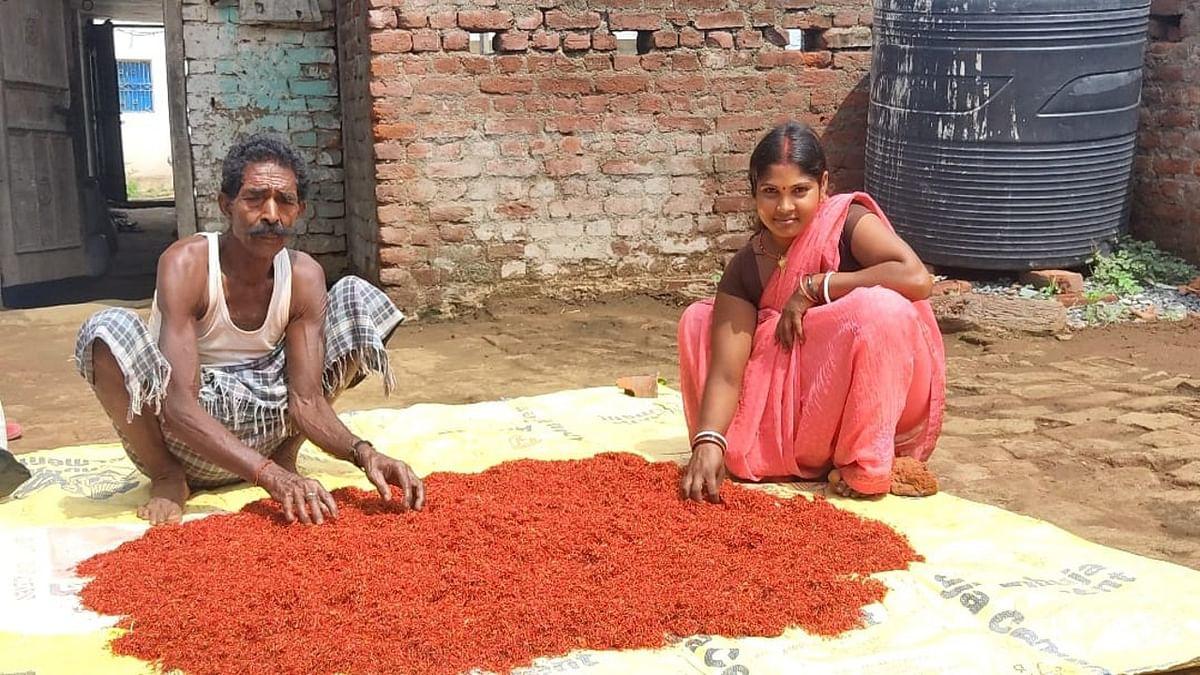 केसर की खुशबू से महक उठा रामगढ़ का गोला क्षेत्र, ललिता ने इसकी खेती कर सबको चौंकाया
