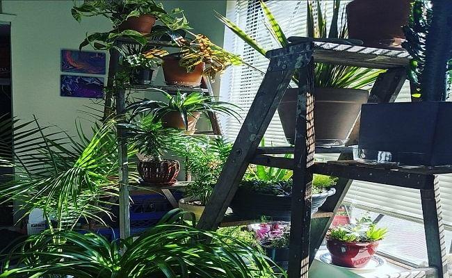 घर में पौधे लगाने प्रेरित कर रहा बिहार सरकार, ऑक्सीजन के लिए चला रहा Nature Cures You अभियान