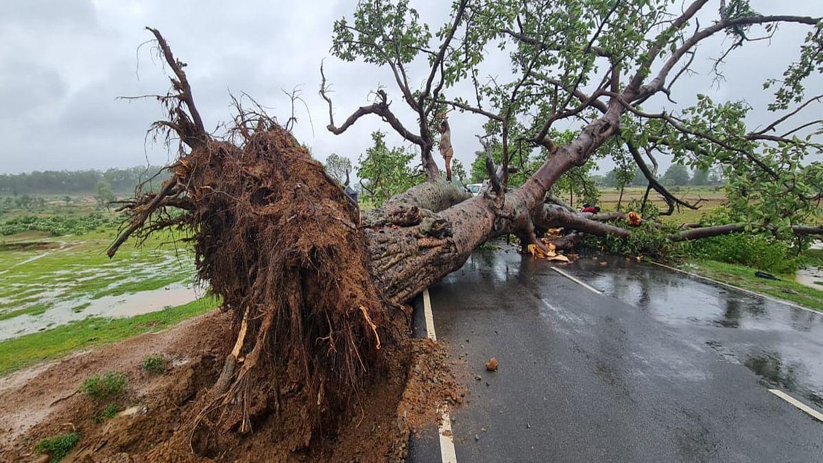 Jharkhand news : पश्चिमी सिंहभूम के जगन्नाथपुर-जैंतगढ़ में पेड़ गिरने से आवागमन ठप.