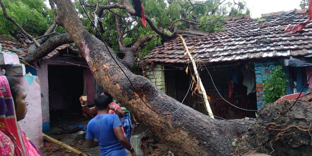 बड़ा पेड़ टूटकर मकान पर गिरा