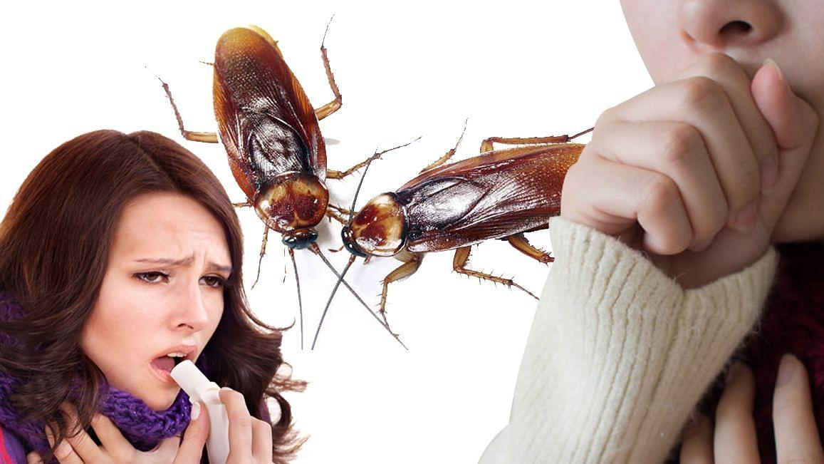 Corona महामारी के बीच घर से ऐसे दूर रखें Cockroach, कफ संक्रमण के साथ हो सकती हैं ये गंभीर बीमारियां
