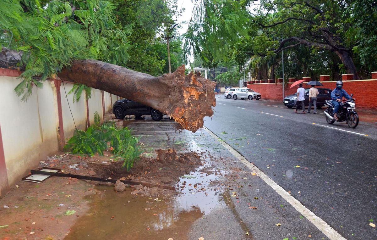 यास तूफान में पेड़ और दीवार गिरने से सात की मौत, सीएम नीतीश ने की सावधानी बरतने की अपील