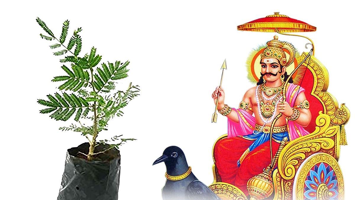 Shani Dosh Nivaran: शनिदेव को अतिप्रिय है ये पौधा, इसकी पूजा करने पर दूर होते हैं शनि दोष और घर में बनी रहती है सुख-समृद्धि