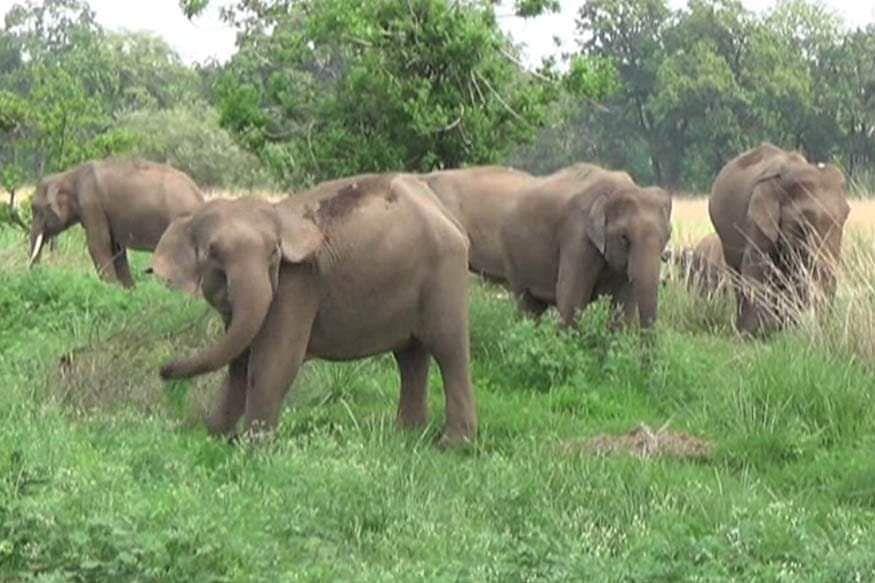 झारखंड में लगातार बढ़ रहा है हाथियों का तांडव, 11 साल में 800 लोगों की ले ली जान, इन जिलों में सबसे अधिक