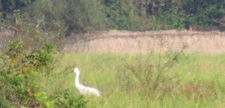 Bihar News: मॉनसून के साथ ही बिहार में आने लगा साइबेरियन पक्षी, देखें तस्वीर