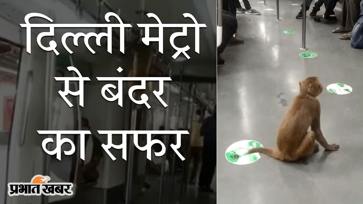 दिल्ली मेट्रो से एक बंदर का सफर, सोशल मीडिया पर वीडियो VIRAL, आपने देखा क्या?