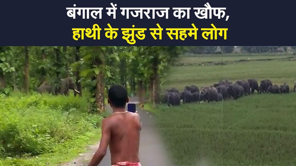EXCLUSIVE: बंगाल के जलपाईगुड़ी में गजराज का खौफ, हाथियों के झुंड से सहमे लोग