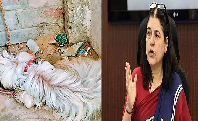 बिहार: पालतू कुत्ते की हालत नाजुक, मालिक ने इलाज से किया इनकार, दिल्ली से मेनका गांधी की पहल पर दर्ज हुआ FIR