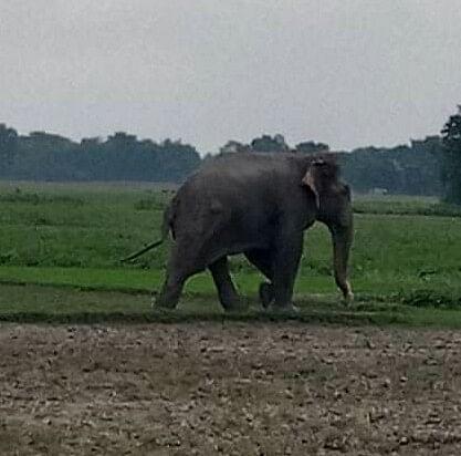नेपाल से भटक कर आए हाथी ने मचाया आतंक, कई मकान तोड़े, कुचलकर बच्चे को  मार डाला