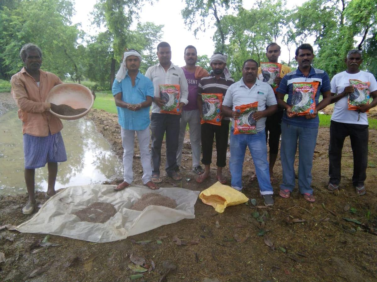 शुगर फ्री आलू के बाद पलामू में शुगर फ्री काला धान की खेती शुरू, इन बीमारियों में है फायदेमंद