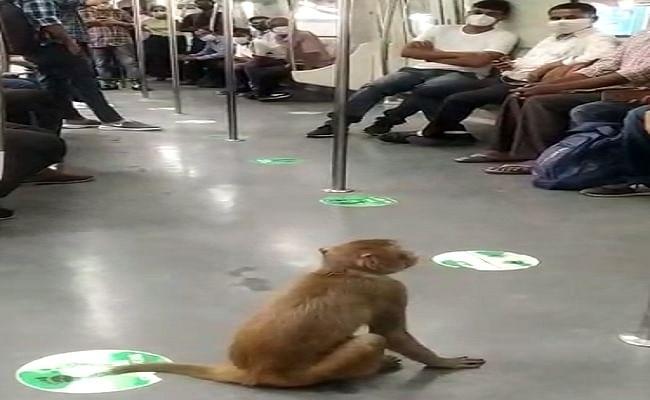दिल्ली मेट्रो में बंदर के घुसने का वीडियो वायरल होने पर डीएमआरसी ने यात्रियों से की ये अपील