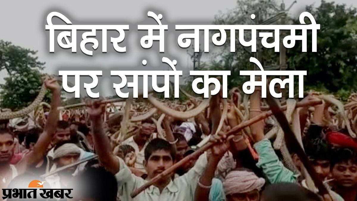 बिहार में नागपंचमी पर अनोखा मेला, बेगूसराय और समस्तीपुर में सांपों का जुलूस, वीडियो देख दंग रह जाएंगे आप