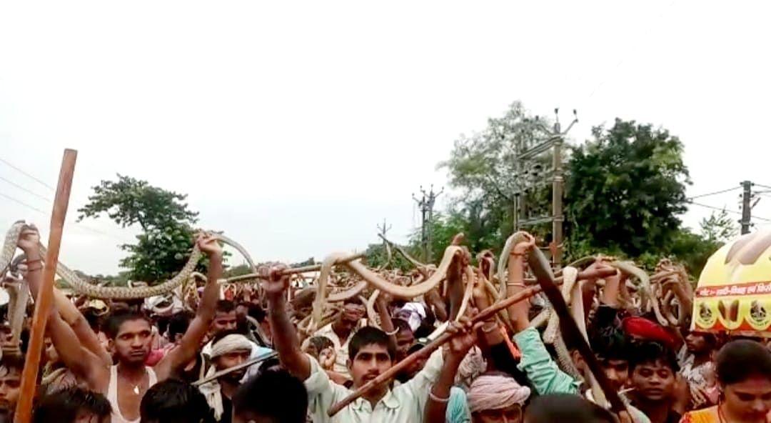 बिहार में सांपों का लगा मेला,भगत पोखर से निकाले विषैले सांप और गले में लपेट घुमने लगे शहर
