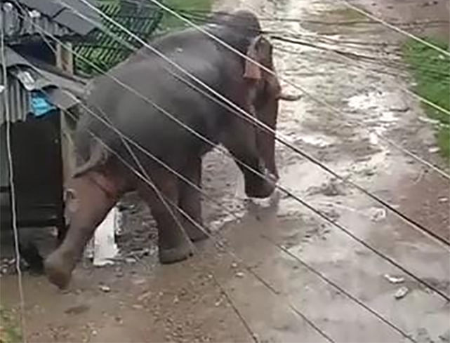 नेपाल के जंगली हाथी का भारत में आतंक, ग्रामीण घर छोड़कर भागे