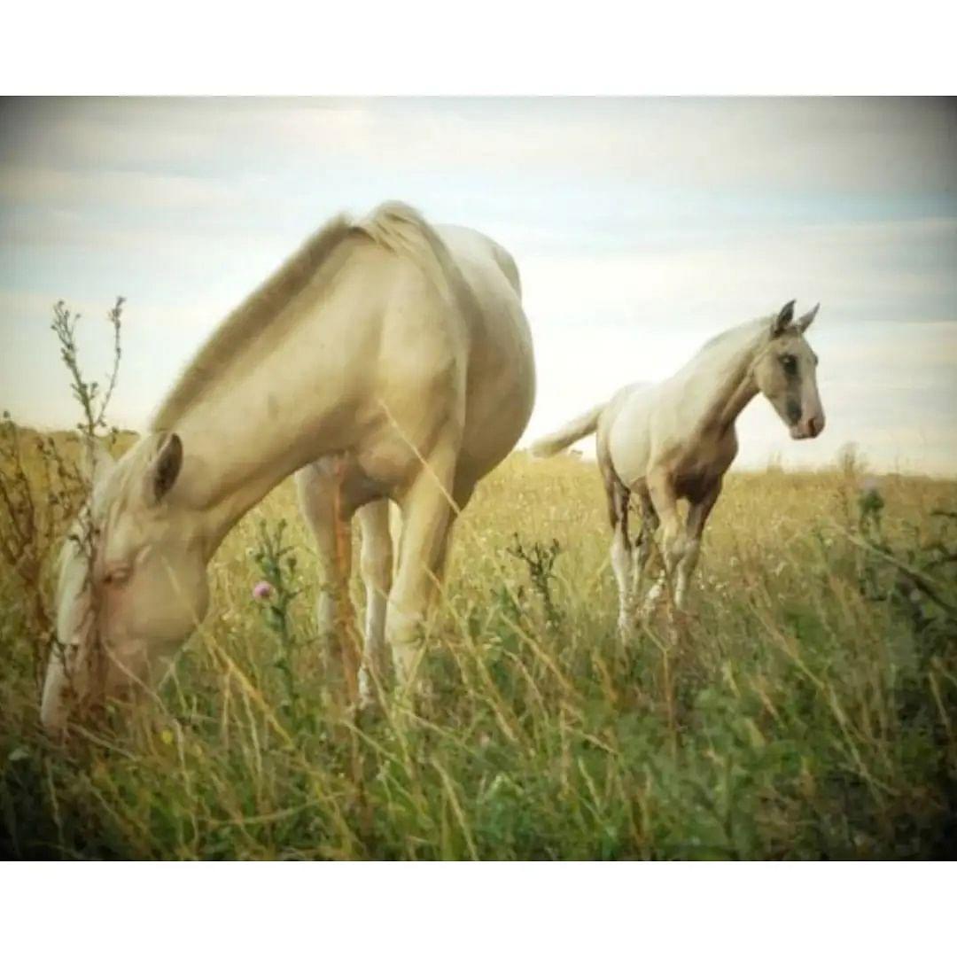 स्वप्न में सफेद घोड़ा दिखता है तो राज पद की प्राप्ति होगी