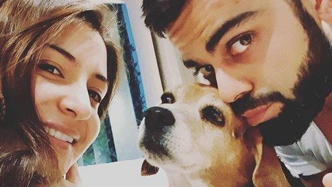 International Dog Day: डॉग लवर हैं ये भारतीय क्रिकेटर्स, धोनी से लेकर कोहली तक के पास है सबसे महंगे कुत्ते