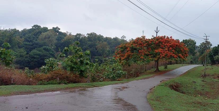 Weather Update : झारखंड में Monsoon कब तक रहेगा सक्रिय, कब से होगी भारी बारिश, आज यहां हैं बारिश के आसार