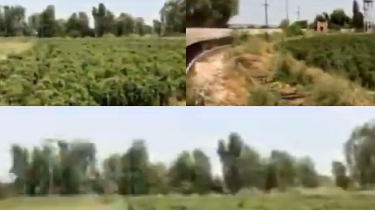 पाकिस्तान में क्रिकेट का हाल, खेत में बदला क्रिकेट स्टेडियम, हो रही कद्दू और मिर्च की खेती, देखें VIDEO