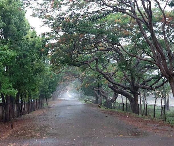 Jharkhand Weather Forecast : झारखंड में फिर बदलेगा मौसम का मिजाज, दुर्गा पूजा में होगी बारिश, कब से लगेगी ठंड
