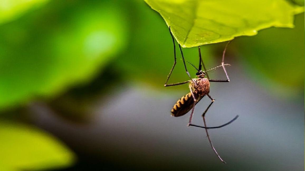 Dengue: मध्य प्रदेश में थम नहीं रहा डेंगू का कहर, ग्वालियर में एक दिन में 18 नये मामले, भोपाल से बुलाई गई टीम