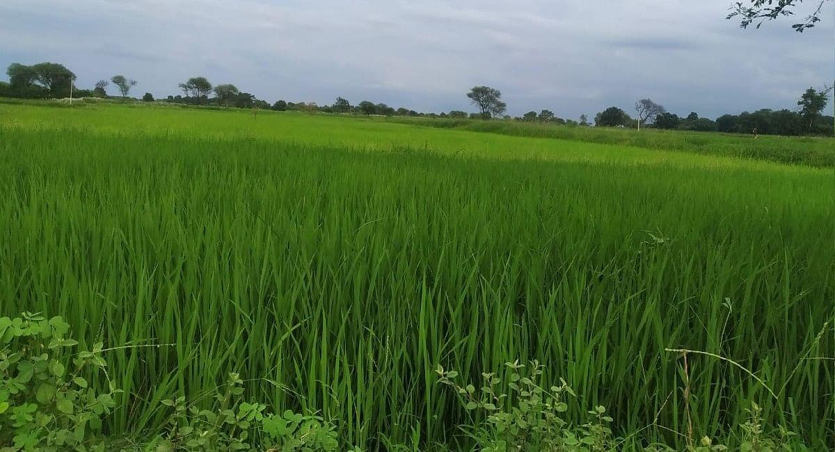 PM Kisan Samman Nidhi 2021 : मोदी सरकार गिफ्ट  देने के मूड में! किसानों के खातों में 4000 रुपये आ सकते हैं