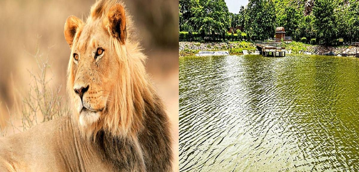 Bihar: गुजरात से मंगाए गए छह शेर, 600 रुपये में करें राजगीर, नालंदा और पावापुरी की सैर, जानें बुकिंग का तरीका