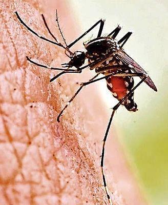 UP में डेंगू का कहर, पीड़ितों का आंकड़ा 6 हजार के पार, अगस्त-सितंबर में सबसे ज्यादा मामले