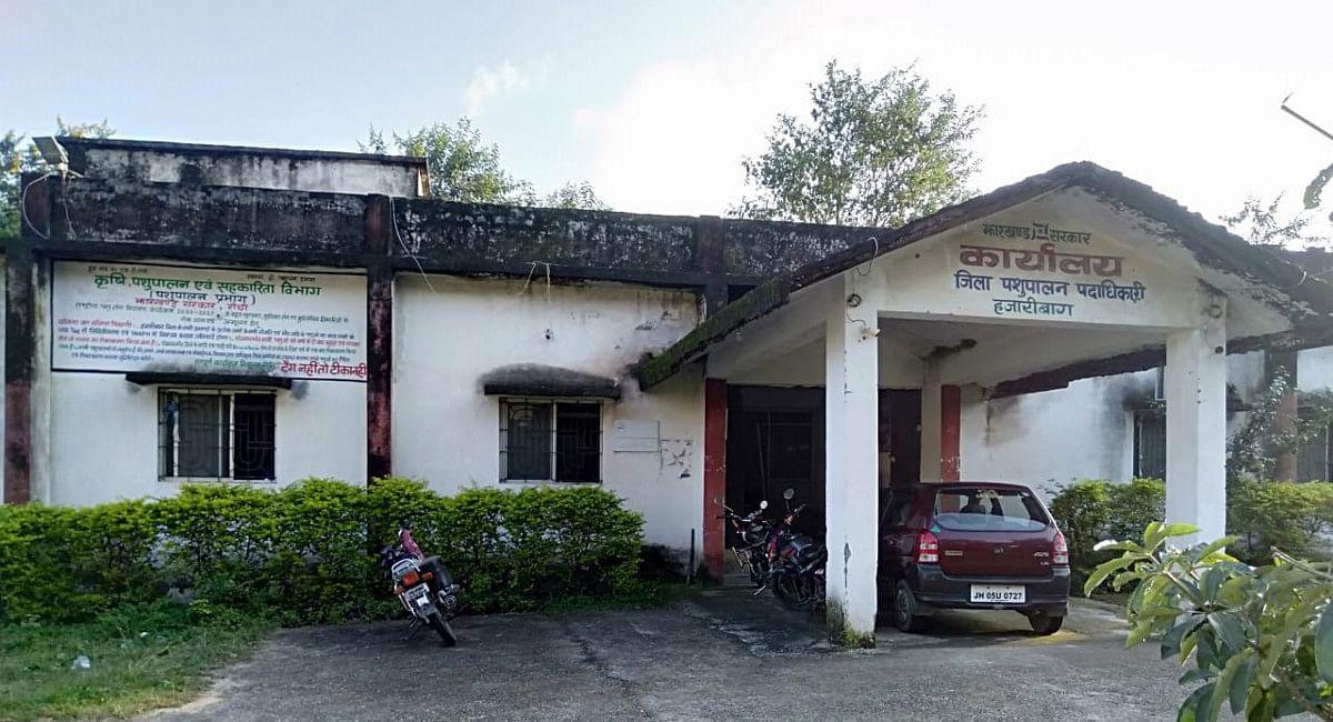 पशुपालन विभाग हजारीबाग में वेटनरी डॉक्टर्स समेत कई कर्मियों का अभाव, ग्रामीण नहीं करा पा रहे हैं पशुओं का इलाज