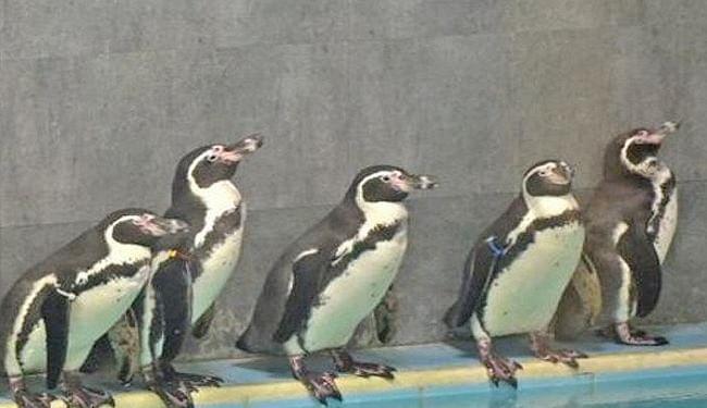 महाराष्ट्र: पेंग्विन की देखभाल के लिए 15 करोड़ का टेंडर, कांग्रेस ने शिवसेना को घेरा, दागे तीखे सवाल
