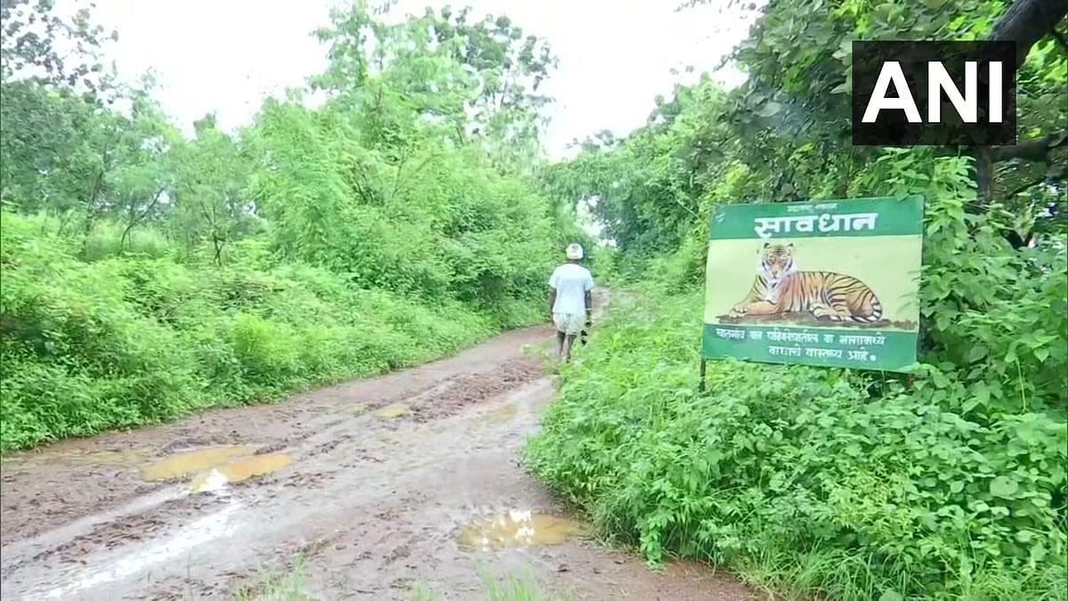 महाराष्ट्र के गढ़चिरौली में बाघ का आतंक, 15 लोगों ने गंवायी जान, स्पेशल टीम कर रही है तलाश