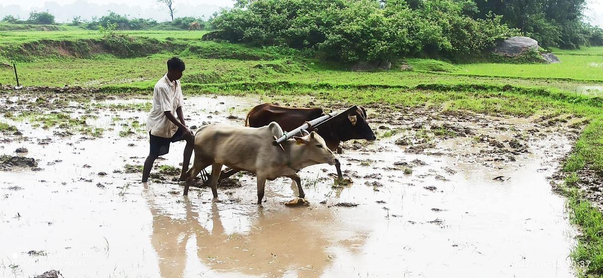 PM Kisan: किसानों के खाते में कब आयेगी 10वीं किस्त, पति-पत्नी दोनों को मिलेगा लाभ? जानें नियम